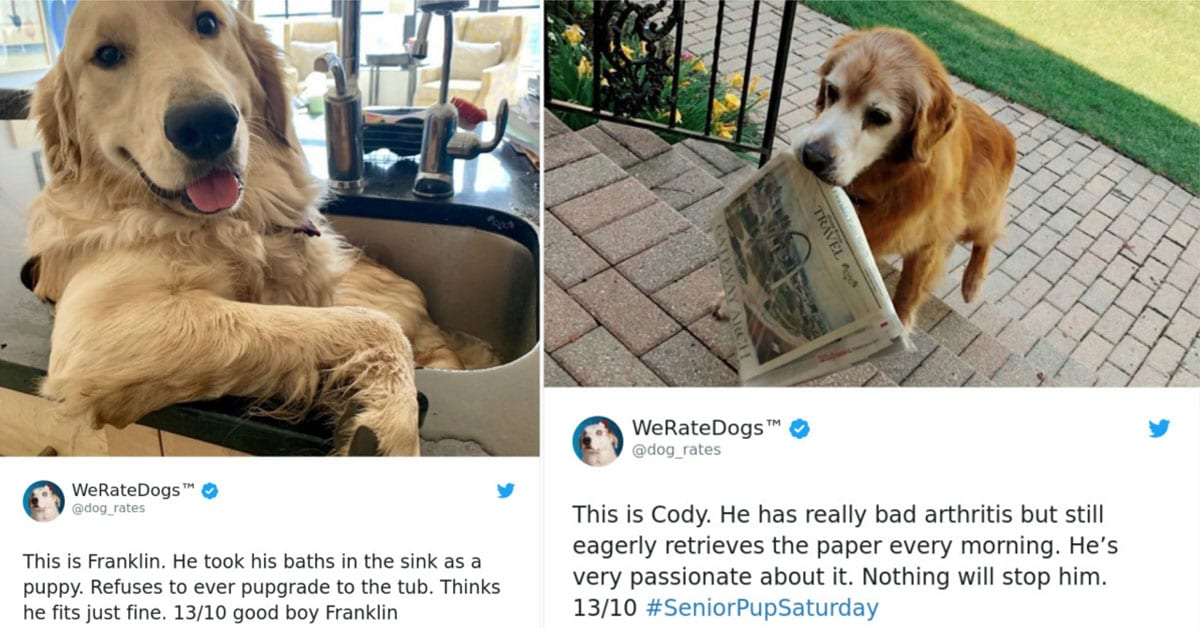20 Great Tweets from WeRateDogs