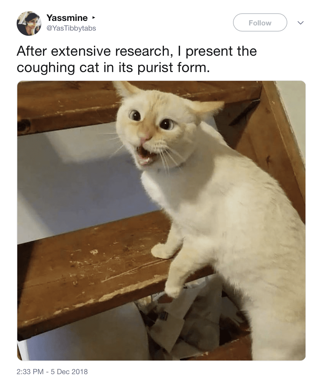 The Coughing Cat Is Maybe the Last Meme to Win the ...