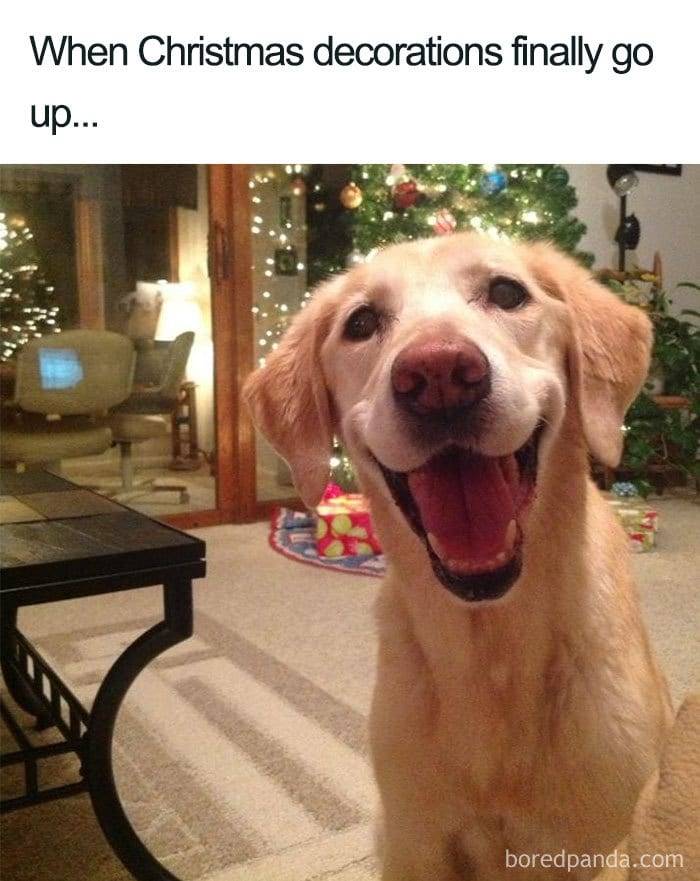 20 Hilarious Christmas Memes To Get You In The Holiday Spirit Make your own images with our meme generator or animated gif maker. 20 hilarious christmas memes to get you