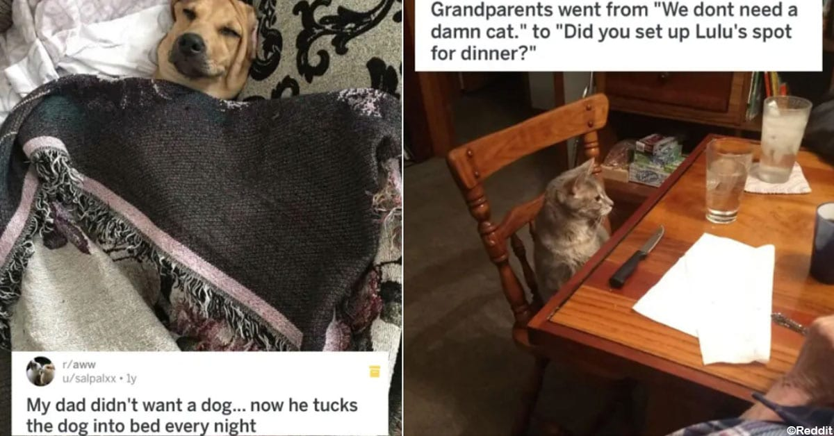 15 Reluctant Pet Owners Who Eventually Came Around